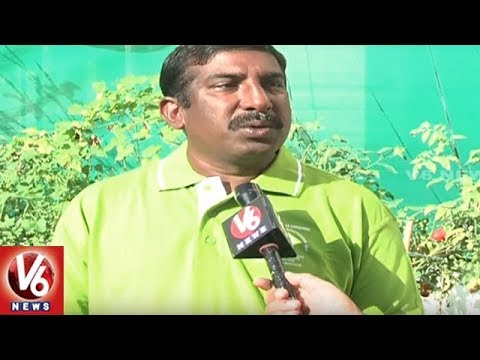Special Story On Ravichandra's Organic Roof Gardening | Hyderabad | V6 News