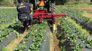 Ceres: Multi-Rototiller on Strawberry Bed