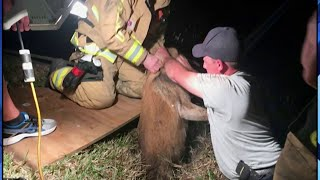 Service dog rescued