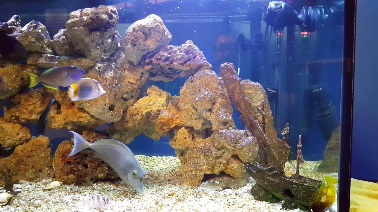 Fish in tank died - Fish Tank Diaries Foxface Died 09 17 16 Saturday