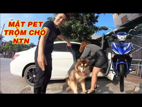 Mật vào nhà NTN Vlog thử bắt trộm Gấu mang về Hà Nội - Mật Pet Family