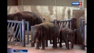 В зоопарке Ростова отмечают День защиты животных