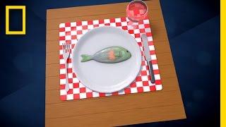 Are You Eating Plastic for Dinner? | Short Film Showcase