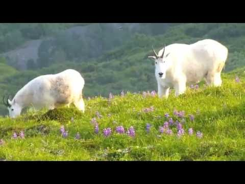 Hiking across Kodiak Island: Old Harbor to Larsen Bay