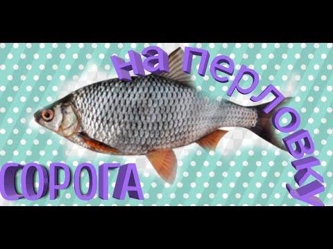 Как правильно приготовить перловку для рыбалки