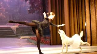 Парный балетный танец с собакой вызвал бурные аплодисменты зрителей
