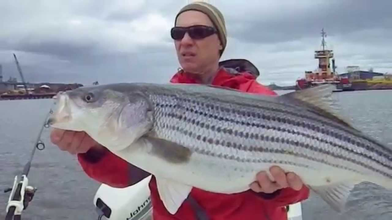Striper fishing hudson river ny tg2 youtube for York river fishing report