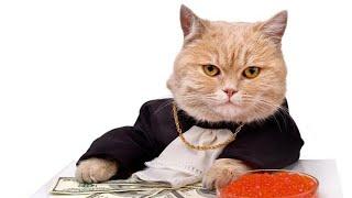 Смешные и милые животные Новинка 2018 видео про котов и других животных