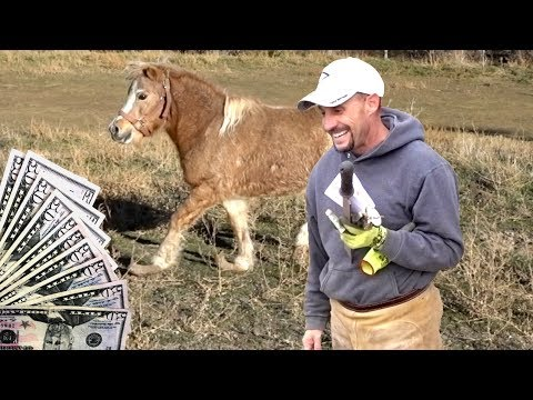 Tipping Farrier $500 For Rescuing Pony