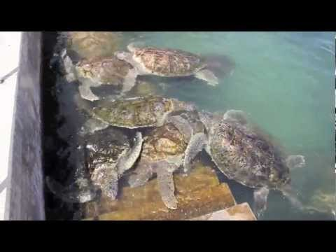 Cayman Island Turtle Farm