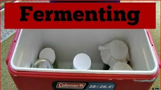 How to Make a Culture Box for Fermenting