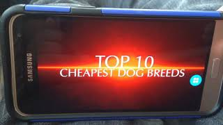 Animal tube 10 top cheapest dog breeds
