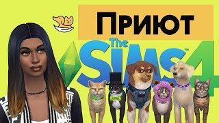 🔴 🔥 Стрим🔴The Sims 4►Приют►/Кошки и собаки/Часть 1