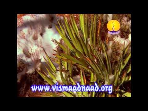 AGSS 1997 : Raag Kanara - Siromani Ragi Bhai Balbir Singh Ji Amritsar