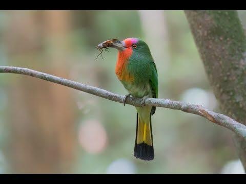 Birdwatching At Kaeng Krachan. 崗卡章公園賞鳥