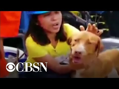 Dog rescued by oil rig crew 135 miles offshore from YouTube · Duration:  31 seconds
