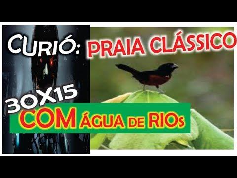 BAIXAR CLASSICO PRAIA CANTO CURIO DE REPETIDOR