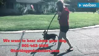 How to Stop Leash Pulling - Middlefield - Dog Training
