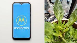 Motorola One Macro Initial Impressions! Redmi Note 8 Pro Macro Camera comparison!