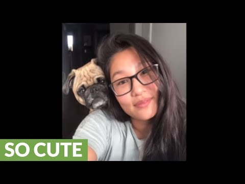 Pug hilariously joins 'selfie' with owner