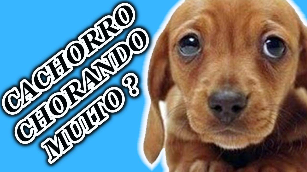 Cachorro Chorando [ 5 DICAS para ajudar o seu CACHORRO ]