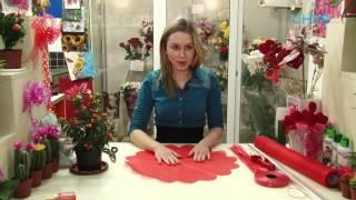 видео Уход и размножение паслена комнатного