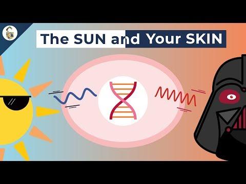 How UV Rays Damage Skin