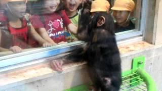 チンパンジーのコースケ。子供たちの笑顔がかわいいかも。