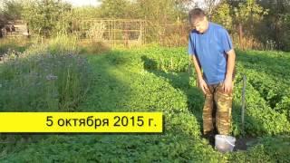 Уход за озимыми растениями: подготовка грядки под чеснок осенью