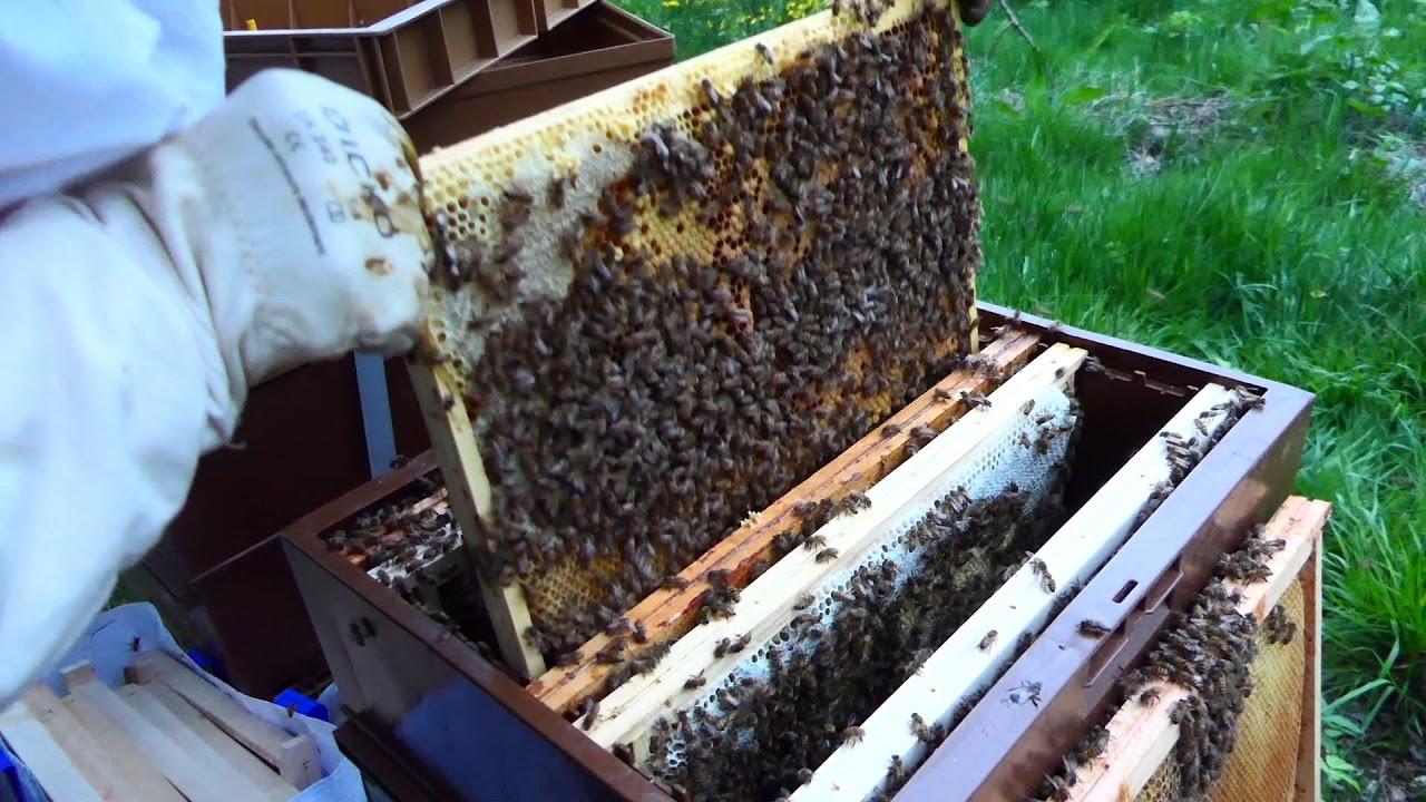 multiplication d 39 essaims partir d 39 une ruche forte doovi. Black Bedroom Furniture Sets. Home Design Ideas