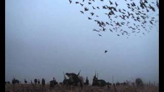Охота гусей аккерманцы