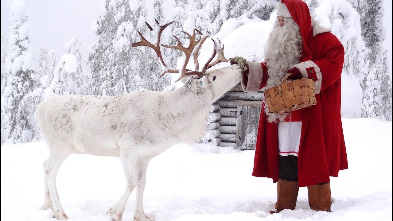 Renne Di Babbo Natale Nomi.Cane Delle Renne Di Babbo Natale Lapponia Santa Claus Finlandia Rovaniemi Pello Video Di Animali Youtube