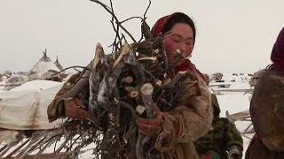 Experiencing Nenet Life On The Frozen Tundra - Tribe With Bruce Parry - BBC