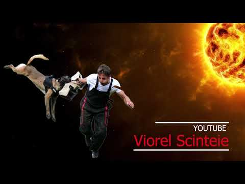 TOP DOGS ATTACKS WITH DOGS AT MY SCHUTZHUND SEMINAR IN BRAZIL !!! Don t miss this ...PREMIERE !!!