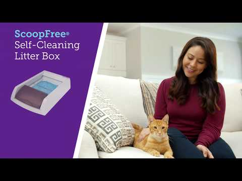 Scooping Stinks! PetSafe® ScoopFree® Self-Cleaning Litter Box