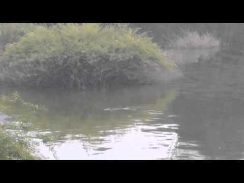 wild crocordile @ anamalai Tiger Reserve, Tamilnadu