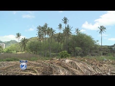 Hawaii Kai tree victory highlights heiau