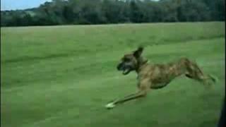 Собака-очумяка