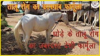 घोड़े के तालू रोग का सफल देसी फार्मूला, Successful domestic formula of horse palate disease