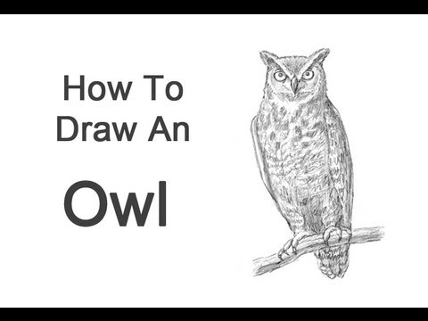 How to draw an owl great horned youtube for Draw an owl in two steps