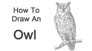 How to Draw an Owl (Great Horned)