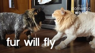 Let The Fur Fly | Our Domestic World
