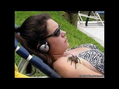 пауки — новые прикольные фото, анекдоты, видео, посты на