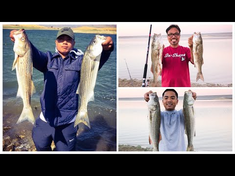 Stripers Are BOILING At San Luis Reservoir October 13, 2020