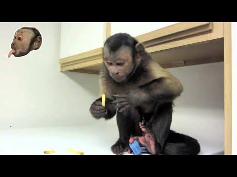 Monkey LOVES French Fries!