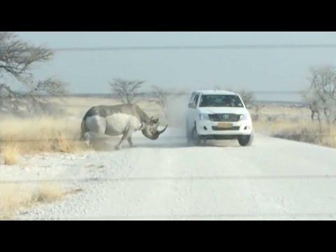 Rhino Attacks SUV Full Of Tourists