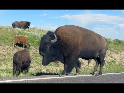The Other Face of Yellowstone