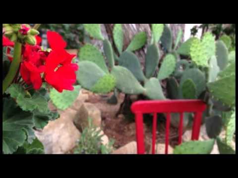Garden in Nolanville