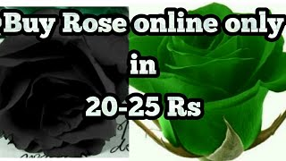 Buy Black & Green Rose Plant online  Only in 20-25 Rs