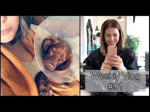 THE CONE OF SHAME!!! | xameliax Weekly Vlog #91